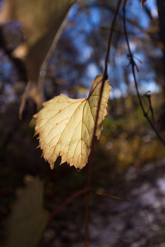 l(a leaf